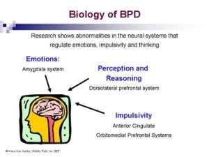 bioofbpd